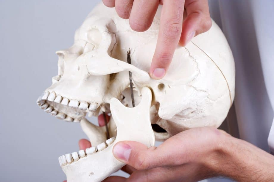 man pointing to tmj on a model of a skull